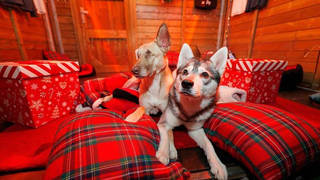 Dogs can have their own Christmassy day out while owners shop