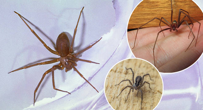 People in Mexico are being warned of this new species of spider