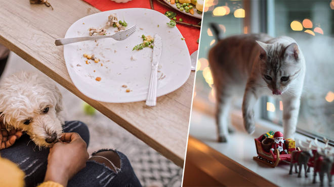 This is what you should feed your pets at Christmas