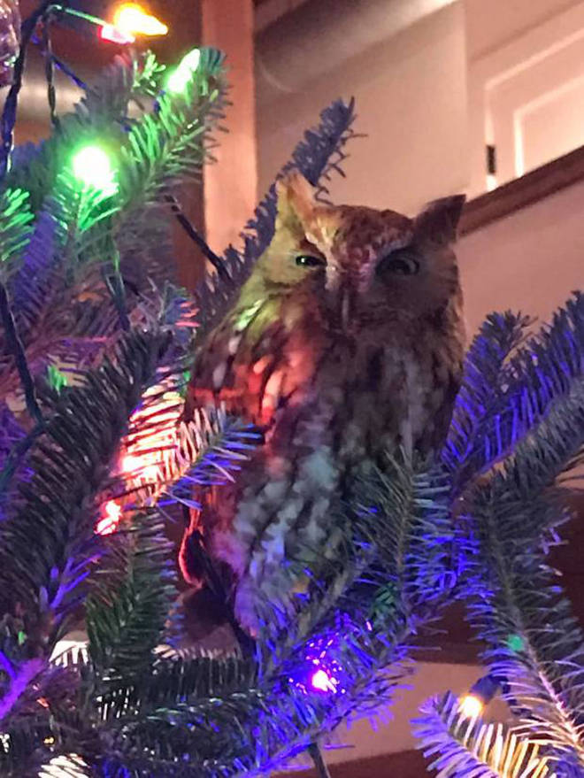 The owl climbed to the top of the tree the morning after