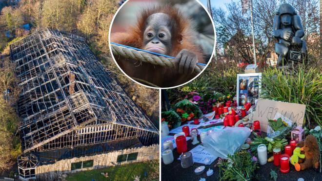 Gorillas, orangutans and chimps die in German zoo fire.