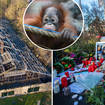 Gorillas, orangutans and chimps die in German zoo fire.