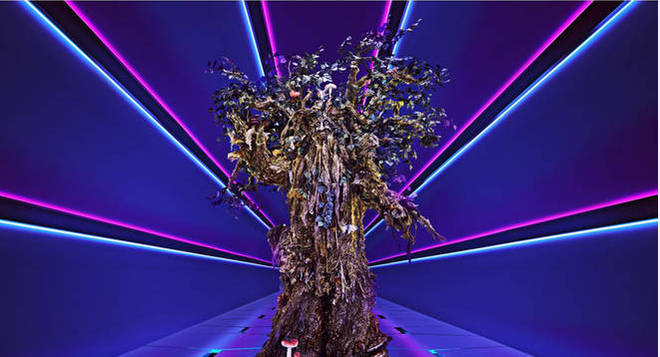The Tree performed Madness' It Must Be Love at the weekend