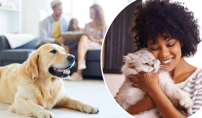 You could soon be allowed to have a pet in your rented home