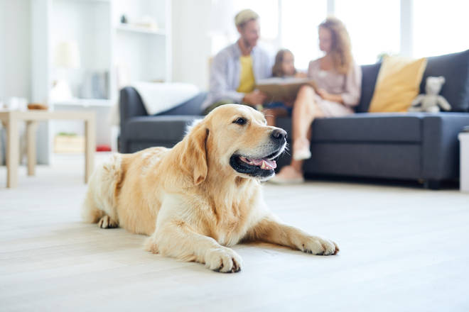 Currently, only 7 per cent of landlords in the UK advertise their properties as allowing pets