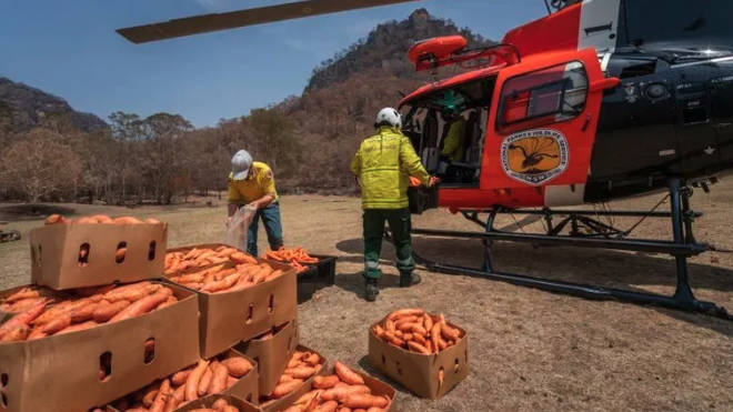 Veggies have been dropped over the Australian Bushfires