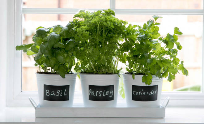 Store your tasty herbs in these bargain £1 plant pots.