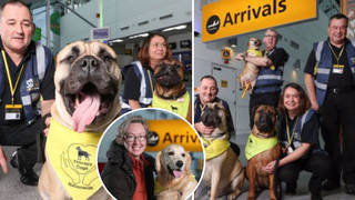 You'll find these therapy dogs in arrivals and departures at Southampton International Airport.