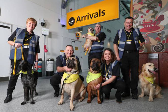 The dogs help passengers with hidden disabilities and those with a fear of flying.