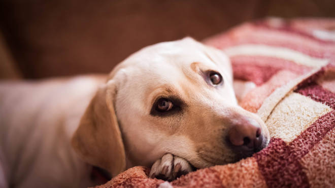 Alabama virus causes 'gashes' and 'sores' to appear on the dogs body