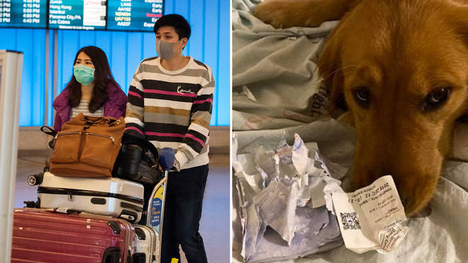 The woman claimed her dog prevented her from flying to Wuhan days before the outbrake