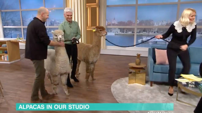 Holly Willoughby was terrified of the alpacas as they arrived on the This Morning set