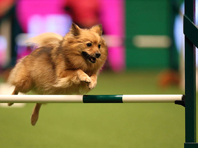 Crufts truly is an incredible experience you'll never forget