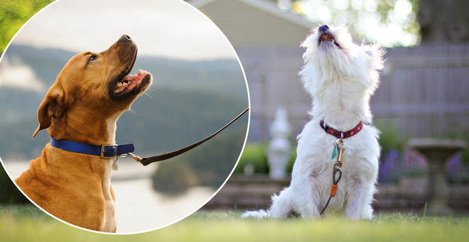 This dog collar will transform your pet's barks