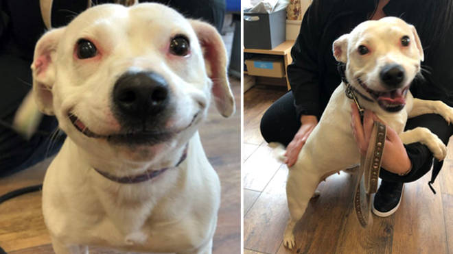 Sybil's new owners fell in love with her amazing smile