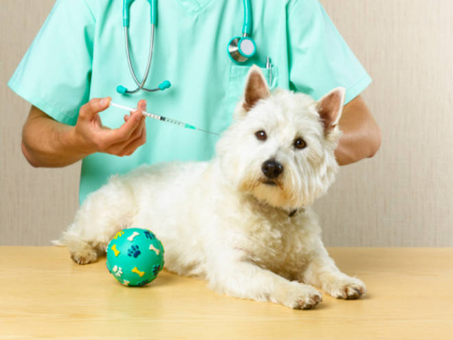 If you need to take your dog to the vet, the chances are you will not be allowed to accompany them in to the treatment room