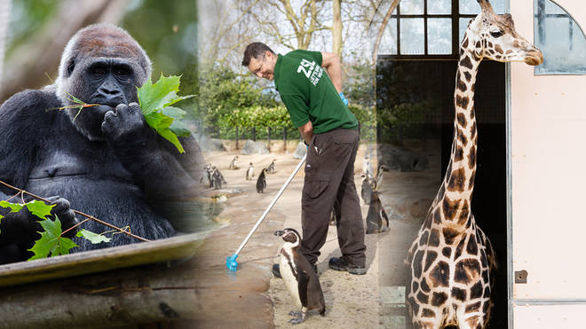 Some zoo workers are continuing to keep the grounds of the zoo in good condition and caring for the animals