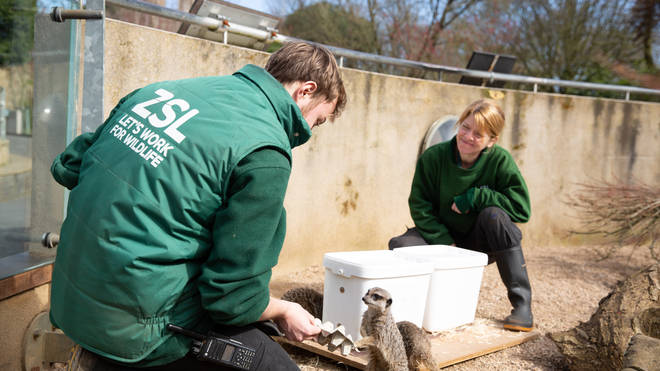 Some workers have moved into the accommodation at the zoo to care for the animals
