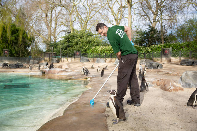 There are still around 18,000 animals at London Zoo that need caring for