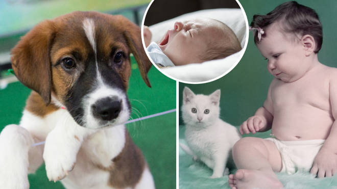Pet owners are giving their four-legged fur-babies the same names we lavish on our children.