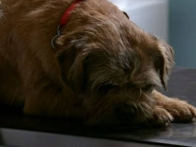 Eccles the dog has died after 14 years on the soap