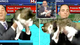 Jeff Lyons was interrupted by his cat during a weather update