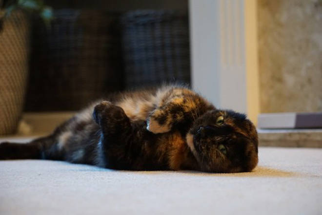She's still a playful cat