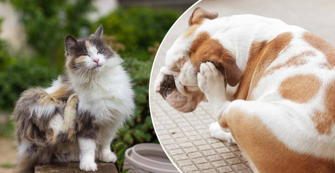 Pet owners have been braced for an unflux of fleas this year