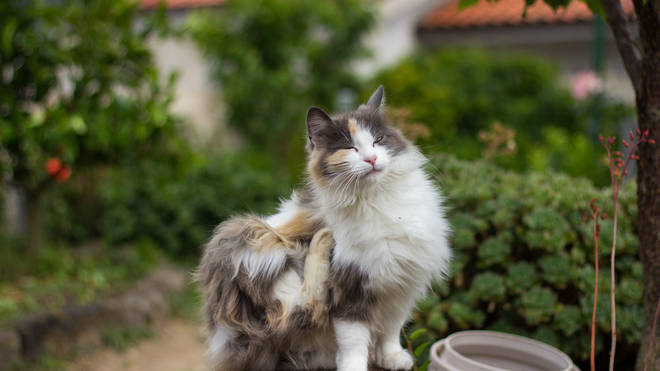 The lockdown has meant that many pet owners have struggled to access flea treatment