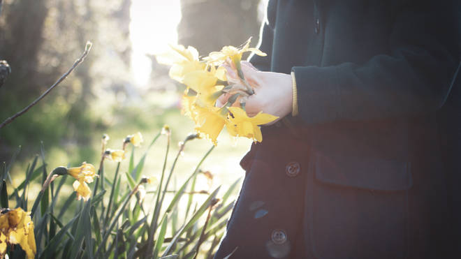 Some flowers can be picked, but there are limits on the amount (stock image)