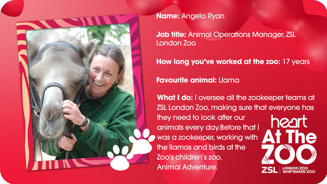 On Monday we found out about what Angela Ryan does at the zoo - apart from cuddling camels!
