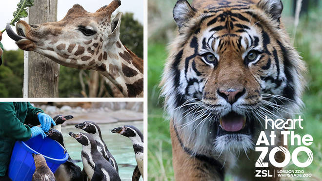 Join Heart as we go behind the scenes at London and Whipsnade Zoos