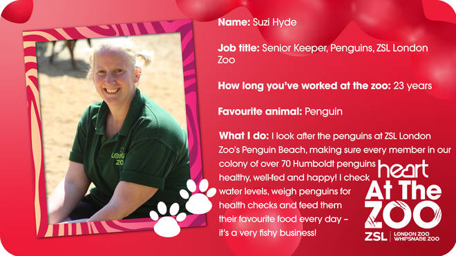 Suzi Hyde is in charge of a LOT of penguins - a fun but exhausting job