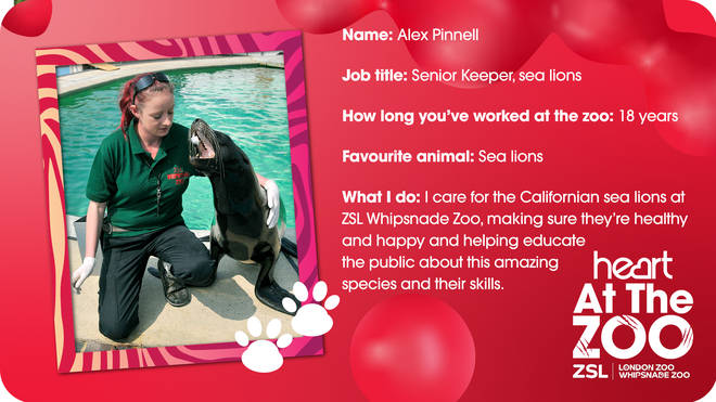 Meet Senior Sea Lion Keeper Alex Pinnell