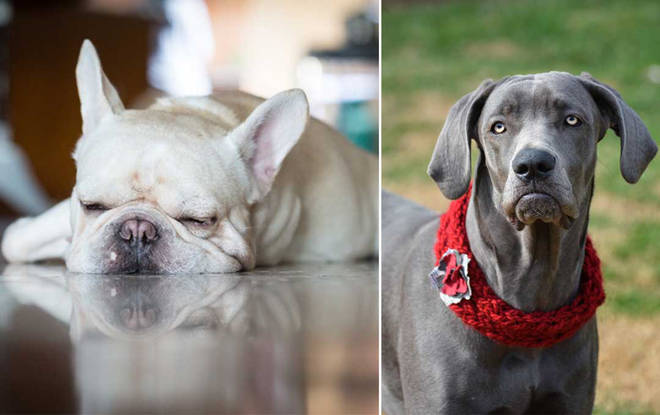 Dogs go through moody phases too