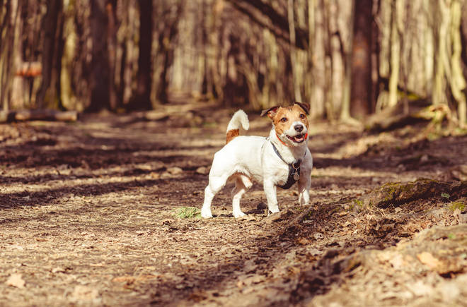 Expert advice on keeping your dog safe in the sun (stock image)