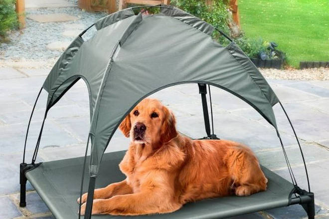 You can buy a covered lounger for your dog for just £20