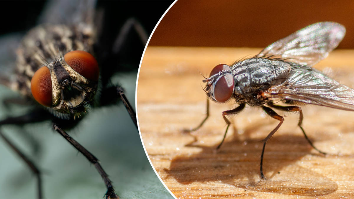 Woman shares genius hack that keeps flies out the kitchen