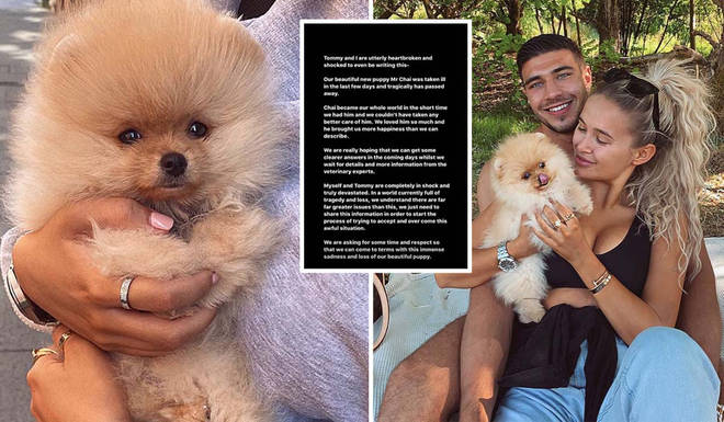 Molly-Mae and Tommy Fury's puppy has passed away