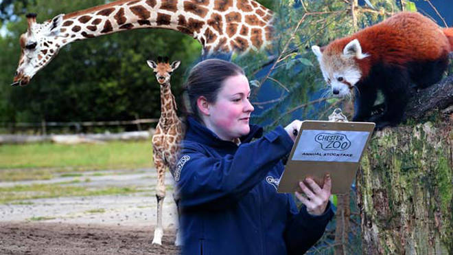 Chester Zoo campaign raises over £1.8million to save zoo amid coronavirus pandemic