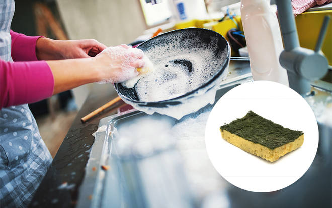 The sponges you use to wash your dishes harbour bacteria