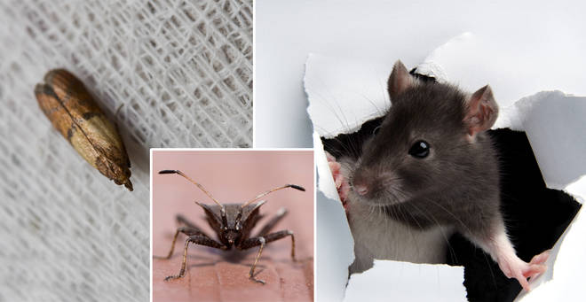 There could be an influx of household pests this summer... (stock image)