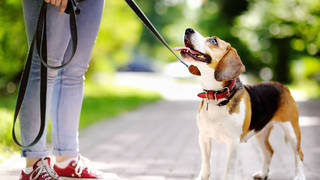 When is it safe to take your dog out in the sun?