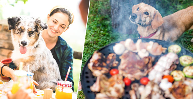 Dogs and cats can't eat a lot of BBQ foods