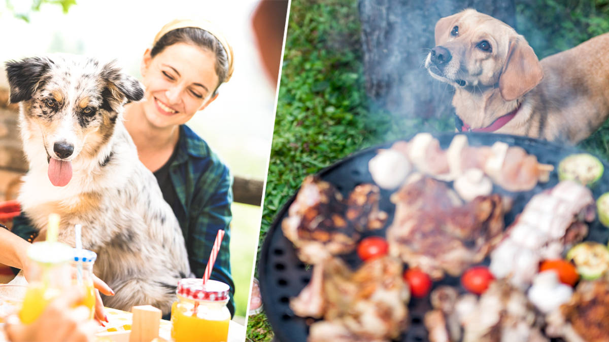 What Can Dogs Eat From A Bbq Safe And Unsafe Foods For Your Pet Heart