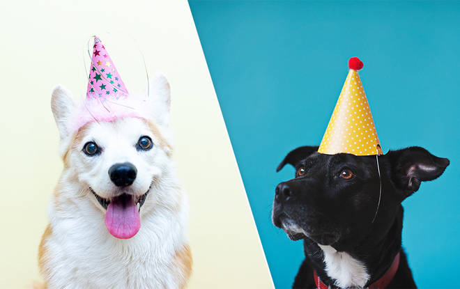 Working out your dog's age has always been simple... or so we thought