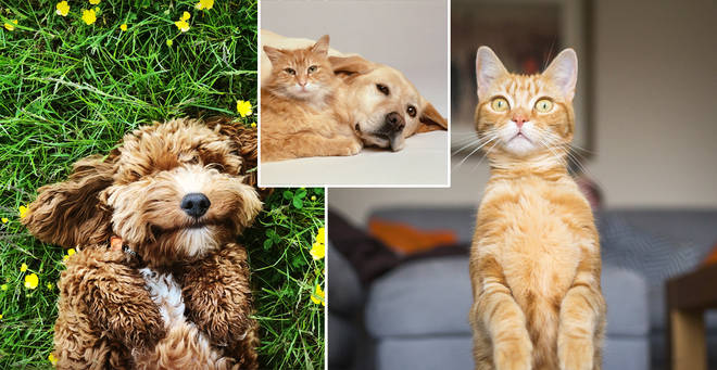 The most popular dog and cat names have been revealed (stock images)