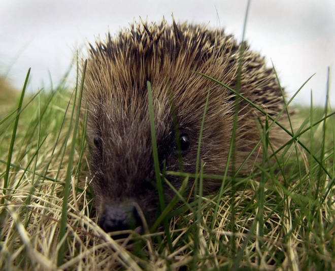 A quarter of British mammals are vulnerable to extinction