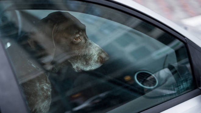 Dogs should not ever be left in cars during hot weather