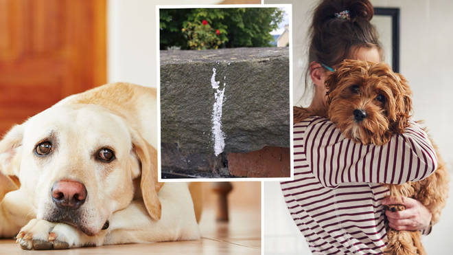 Dog owners have reported seeing white chalk marks outside their homes